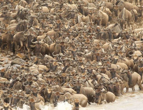 Serengeti-